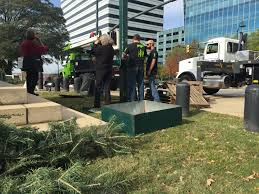 sc christmas tree delivered to state house