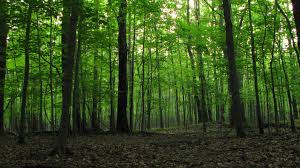 Ohio forest images Hardwood forest in ne ohio unexplained mysteries image gallery jpg
