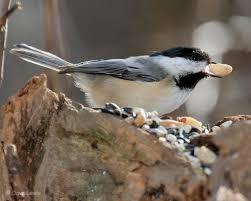 Nj Backyard Birds by How To Identify 20 Winter Backyard Birds At Your Feeders Aerial