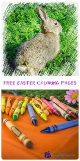 25 pictures easter bunny ideas easter