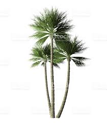 palm trees digital painting stock photo 512524492 istock