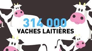l apprentissage agricole dans les hauts de version longue filière lait en hauts de