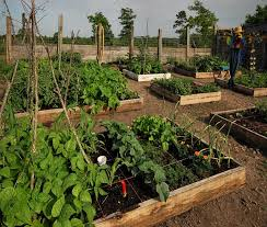 Small Backyard Vegetable Garden by Best Backyard Vegetable Garden Design Ideas Backyard Vegetable