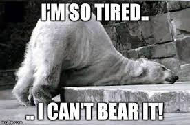 I M So Tired Meme - tired polar bear imgflip
