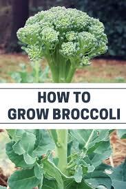 best 25 vegetable garden tips ideas on pinterest indoor