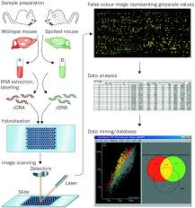 dna microarrays translation of the genome from laboratory to
