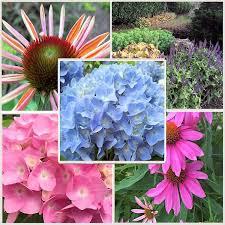 Summer Gardening - a guide to northeastern gardening garden bloggers u0027 bloom day