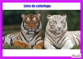 tigre à colorier tooniz lolcats réalisé sur wamiz