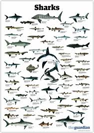 everything you u0027ve ever wanted to know about sharks in south africa