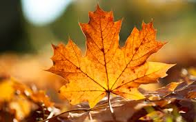 autumn leaves bing images fall wallpaper pinterest nature