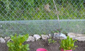 garden design with gardening tips for beginners bunny planting a