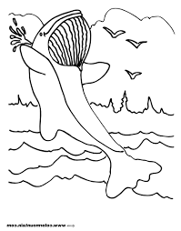 beautiful coloring pages whales dolphins pictures printable