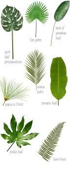 best 25 caribbean decor ideas on asian live plants
