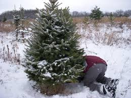 through handlens and binoculars oh christmas tree