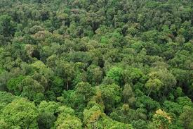 Plants In The Tropical Rain Forest - why are the equatorial rain forest considered to be impenetrable