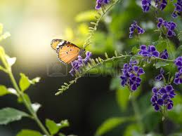 butterfly on left stock photos royalty free business images