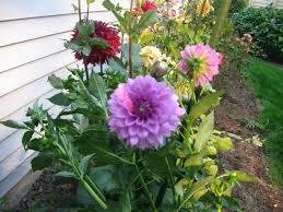 garden garden flowers elegant kate s garden journal fresh