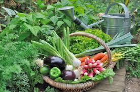 black gold vegetable u0026 food gardening archives black gold