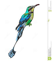 bird stock photo image 34677030
