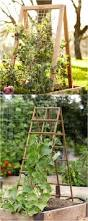 decorating using trellises for astounding garden decoration ideas