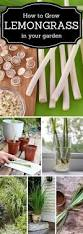 best 20 how to garden ideas on pinterest how to plant flowers