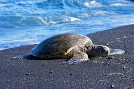 Black Sand Beaches Maui by The Black Sand Beaches Of Hawaii