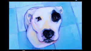 Seeking Pitbull The Painted Pitbull Project Portrait Of A By