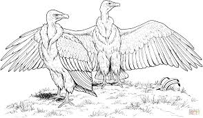 white rumped vulture coloring page free printable coloring pages
