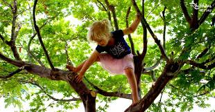 get outside connect climb a tree rhythms of play