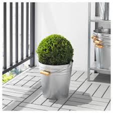 socker greenhouse ikea potted plant 100 kalanchoe kalanchoe sp kalanchoe com fejka