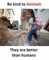 Humans Meme - dopl3r com memes be kind to animals they are better than humans