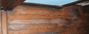 Hardwood Floor Repair Water Damage Repairing Hardwood Floor Water Damage A Definitive Guide