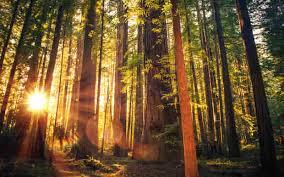 amazing 7 natural wonders of the united states storyomg