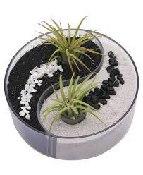 best 25 garden terrarium ideas on pinterest terrarium