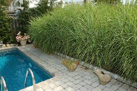 gorgeous ornamental grasses your landscape will growth spurt