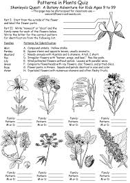 lesson plans science biology botany patterns in plants with