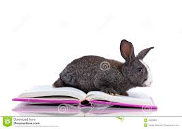 easter bunny books easter bunny reading a books stock illustration illustration of