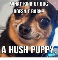 Puppy Memes - what kind of dog doesn t barko a hush puppy dogs meme on me me