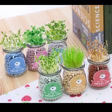 plantes pour bureau diy plantes vertes bonsaï avec céramique plantes pot graines pour