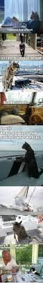 Cat Buy A Boat Meme - i should buy a boat meme viral viral videos