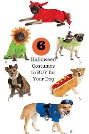 best 25 cute dog costumes ideas on pinterest puppy costume