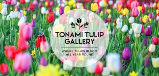 Tonami Tulip Gallery Where Tulips Bloom All Year Round U2013 I Am Aileen