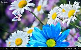 live halloween background daisies flowers live wallpaper android apps on google play