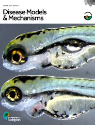 a classification system for zebrafish adipose tissues disease