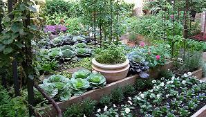 kitchen gardening ideas northeast gardening my organic kitchen garden