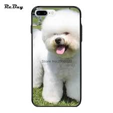 bichon frise 6 years old online buy wholesale frise bichon from china frise bichon