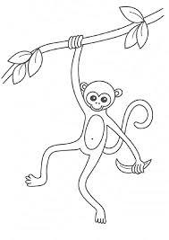 kidscolouringpages orgprint u0026 download printable monkey coloring