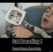 Cat Breading Meme - cat breading been there done that by zfallenheroesz meme center