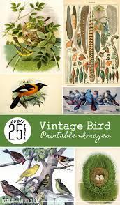 25 free vintage bird printable images remodelaholic bloglovin u0027