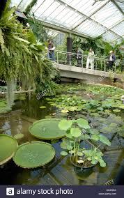Royal Botanic Gardens Kew Richmond Surrey Tw9 3ab Pond Inside Princess Of Wales Conservatory Royal Botanic